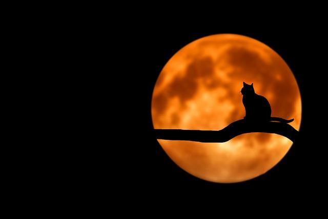 月と猫の画像